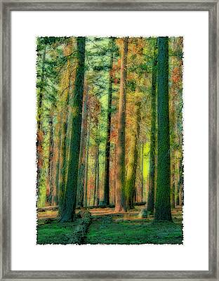 Straight And Tall Framed Print