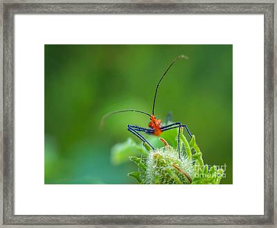 Straight In The Eye Look  Framed Print