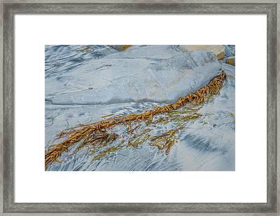 Stranded Framed Print by Joseph Smith