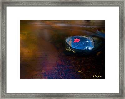 Stranded Leaf Framed Print