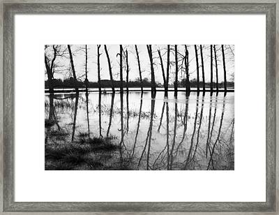 Stranded Trees II Framed Print by Hazy Apple