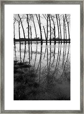 Stranded Trees Framed Print by Hazy Apple