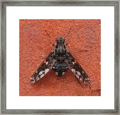 Strange Fly Framed Print by Suhas Tavkar