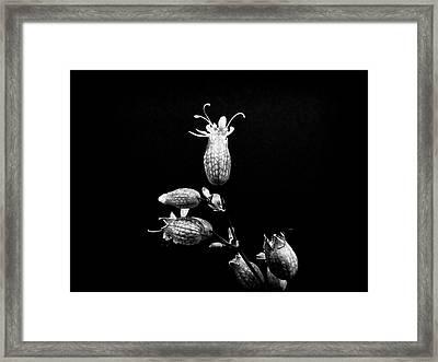 Strange Kind Of Beautiful Framed Print