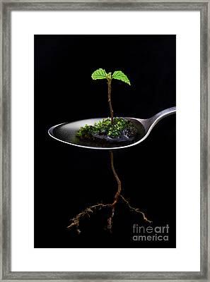 Strange Spring Framed Print