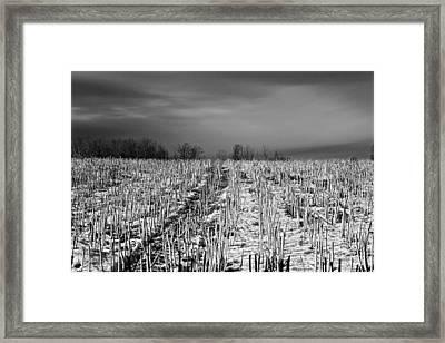 Straw Fields Framed Print