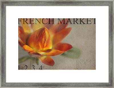 Straw Flower Framed Print