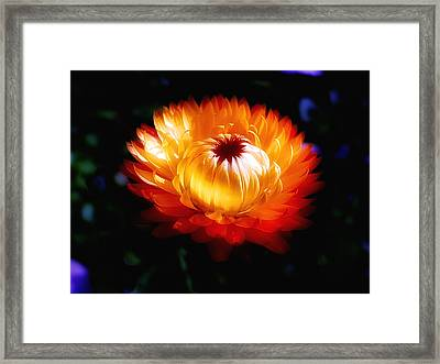 Straw Magic Framed Print