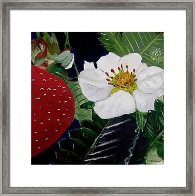 Strawberry And Blossom Framed Print by Brenda Alcorn