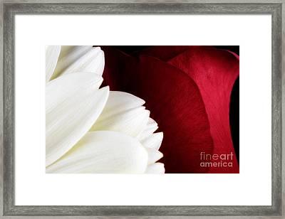 Strawberry And Cream Framed Print by Mark Johnson