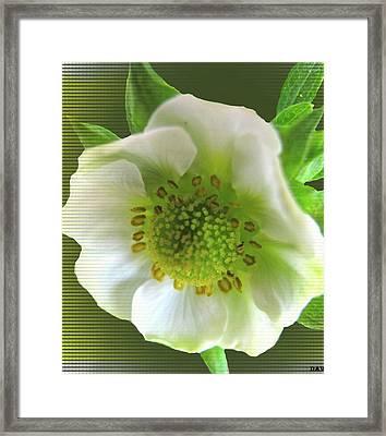 Strawberry Bloom Framed Print by Debra     Vatalaro