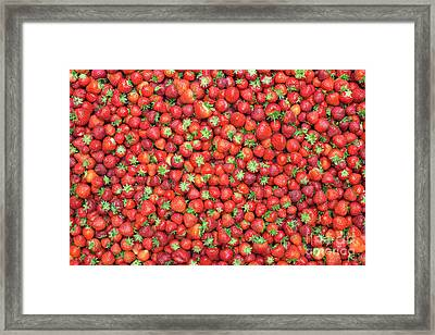 Strawberry Fest Framed Print by Tim Gainey