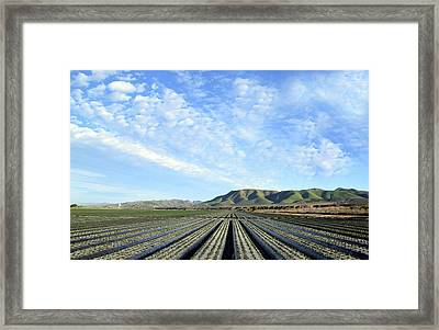Framed Print featuring the photograph Strawberry Fields Forever 2 by Floyd Snyder