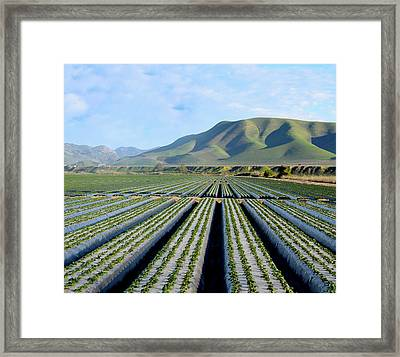 Framed Print featuring the photograph Strawberry Fields Forever by Floyd Snyder