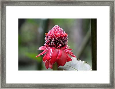 October In Trinidad Framed Print
