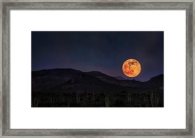 Strawberry Moon  Framed Print