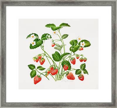 Strawberry Plant Framed Print