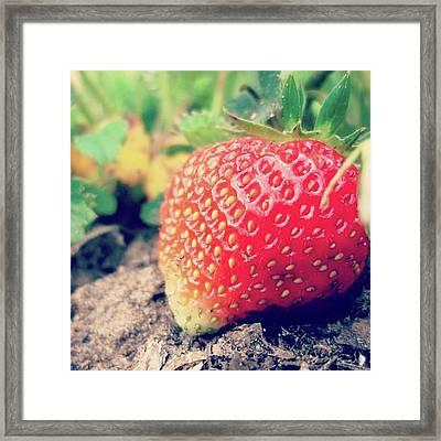 #strawberry #yummy #food #delicious Framed Print