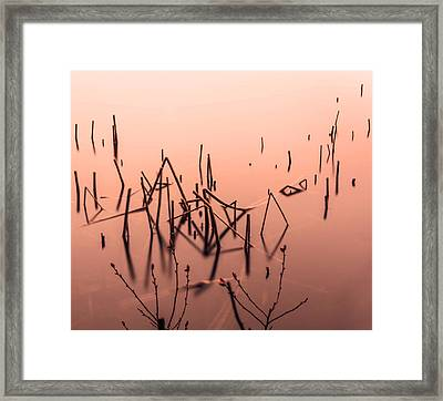 Straws Of Grass Framed Print by Tommytechno Sweden