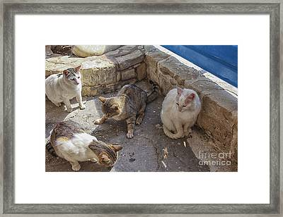 Stray Cats  Framed Print by Patricia Hofmeester