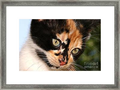 Stray Kitten Framed Print