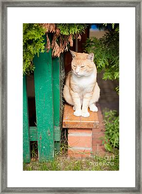 Stray Waif Red Cat Sitting Framed Print by Arletta Cwalina