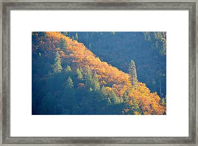 Framed Print featuring the photograph Streak Of Gold by AJ Schibig