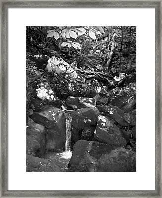 Stream Framed Print by Curtis J Neeley Jr