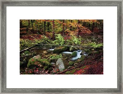 Stream In Autumn Forest Framed Print