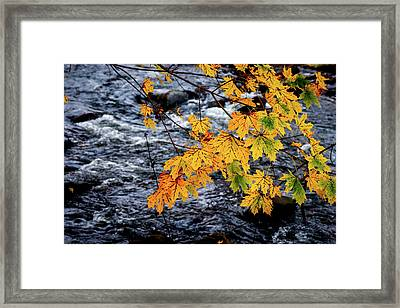Stream In Fall Framed Print