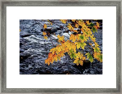 Stream In Fall Framed Print