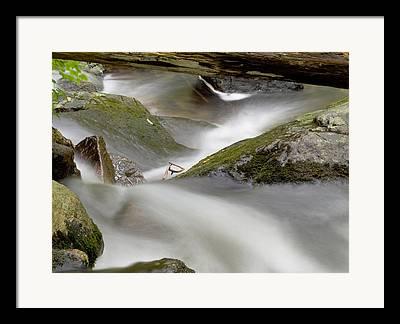 Moss Green Photographs Framed Prints