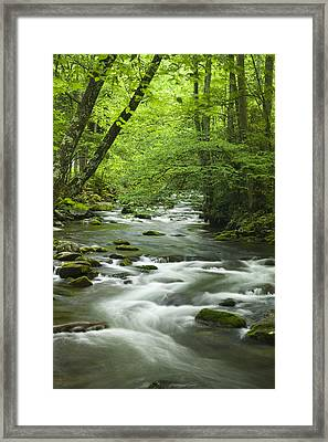 Stream In The Smokies Framed Print by Andrew Soundarajan