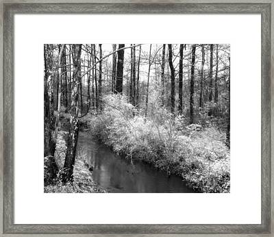Stream In The Woods Framed Print by Fred Baird