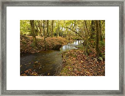 Stream In The Woods Framed Print by Martina Fagan