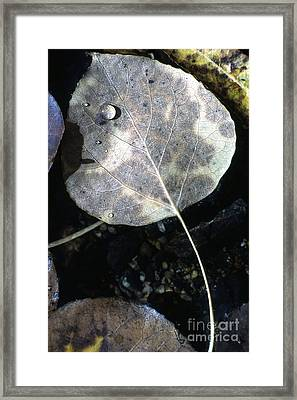 Stream Leaf Framed Print by Norman  Andrus
