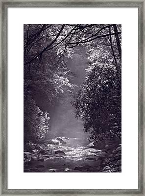 Stream Light B W Framed Print by Steve Gadomski