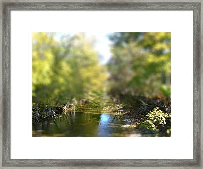 Stream Reflections Framed Print by EricaMaxine  Price