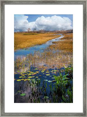 Framed Print featuring the photograph Stream Through The Everglades by Debra and Dave Vanderlaan