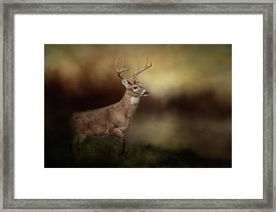 Streamside Buck Deer Art Framed Print