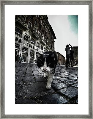 Street Cat Framed Print
