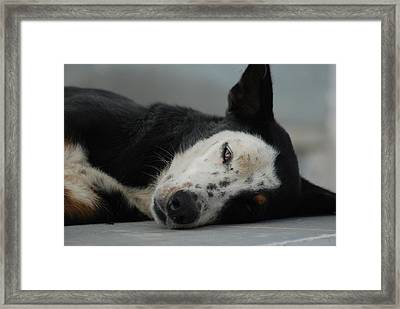 Street Dog Framed Print