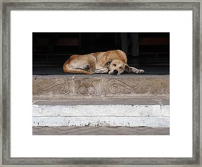 Street Dog Sleeping On Steps Framed Print