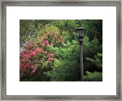 Street Light Framed Print by Ken Bradford