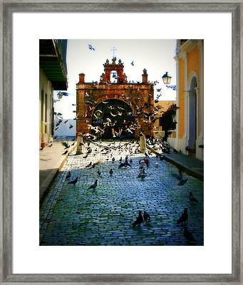 Street Pigeons Framed Print by Perry Webster