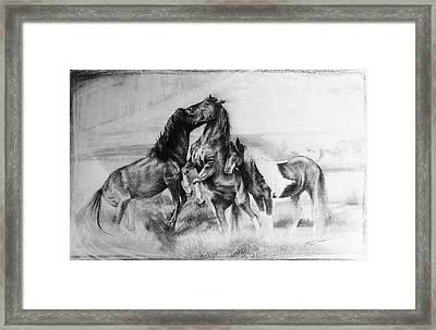 Strength And Honour- Mustangs Framed Print by Susie Gordon