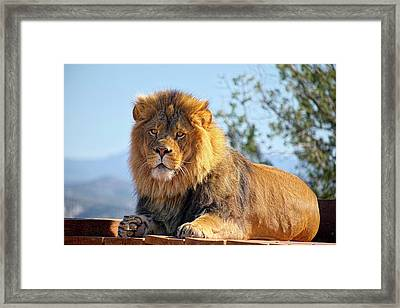 Strength And Power  Framed Print by Lucinda Walter
