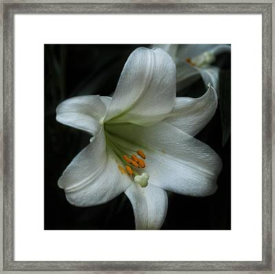 Framed Print featuring the photograph Assurance by Connie Handscomb