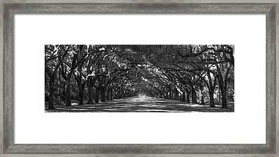 Strength In Numbers Wormsloe Plantation Art Framed Print by Reid Callaway