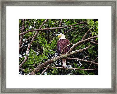 Strength Framed Print by JAMART Photography